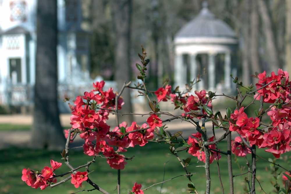 Visitas guiadas a los Jardines de Aranjuez para colegios.